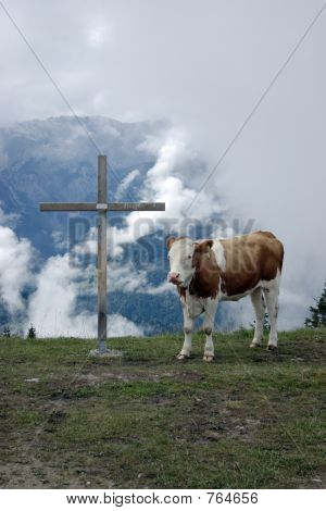 Cow and the cross 2