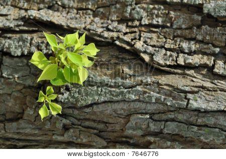 Green leaves on tree bark