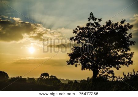 sunset in fields at pengover green, cornwall, uk