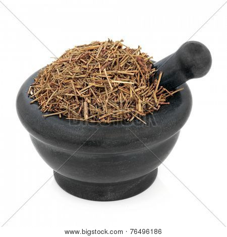 Ephedra herb used in chinese herbal medicine in a marble mortar with pestle over white background. Cao ma huang.