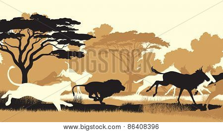 EPS8 editable vector cutout illustration of lions chasing a herd of wildebeest