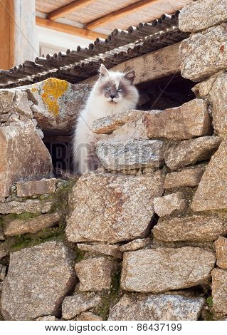 Greek Cats - Beautiful Fluffy Cat Sits Under A Roof.