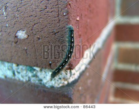 Catapillar Crawling Down Brick Wall