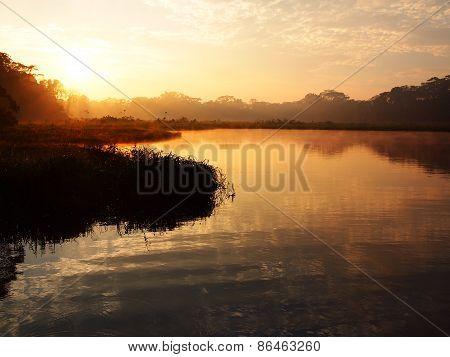 Sunrise In The Amazon Rainforest