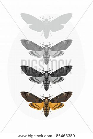The vector illustration of Acherontia Atropos (Death's-head Hawk moth) poster