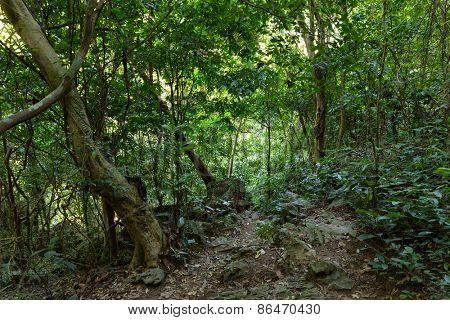 Deep jungle in Cat Ba island, Halong bay, Vietnam