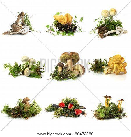 Mushroom collection