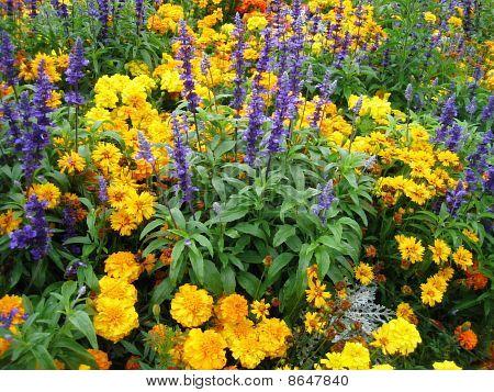 Lilacs in the flowery garden
