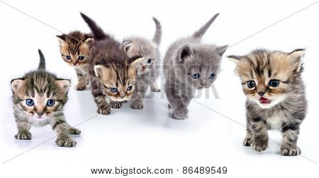 Studio Isolated Portrait Of Large Group Of Kittens