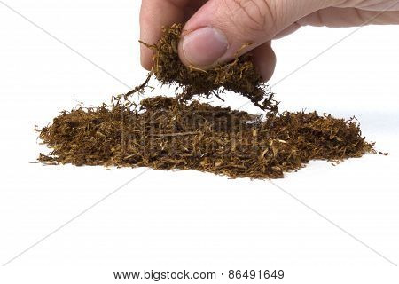 Hand Picking Up Cigarette Tobacco On White