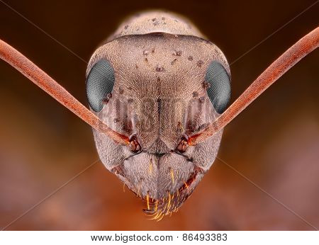Extreme sharp and detailed study of Ant head with some sort of pimples
