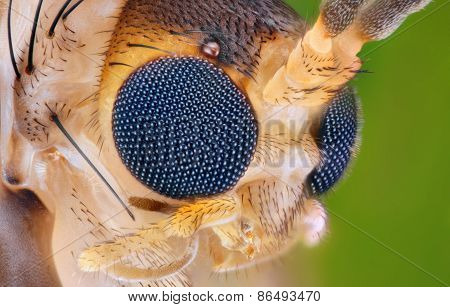 Extreme sharp and detailed study of small insect head taken with 20x microscope objective