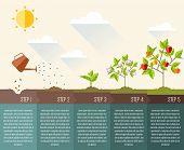 Steps of plant growth. Timeline infographic design. vector illustration poster