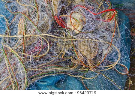 Blue Crabs In Fishnet