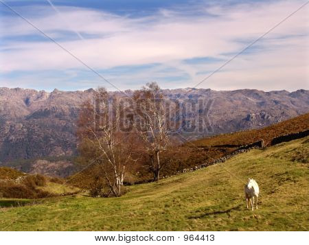 spring landscape with a horse in the mountains poster