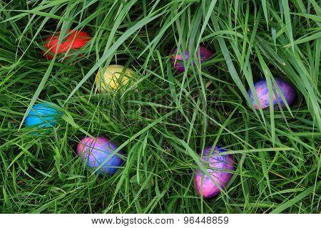Easter Eggs Hunting