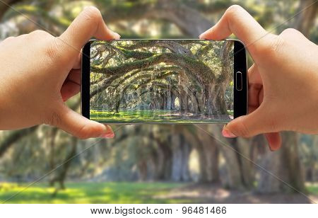 Women in Forest with Smartphone