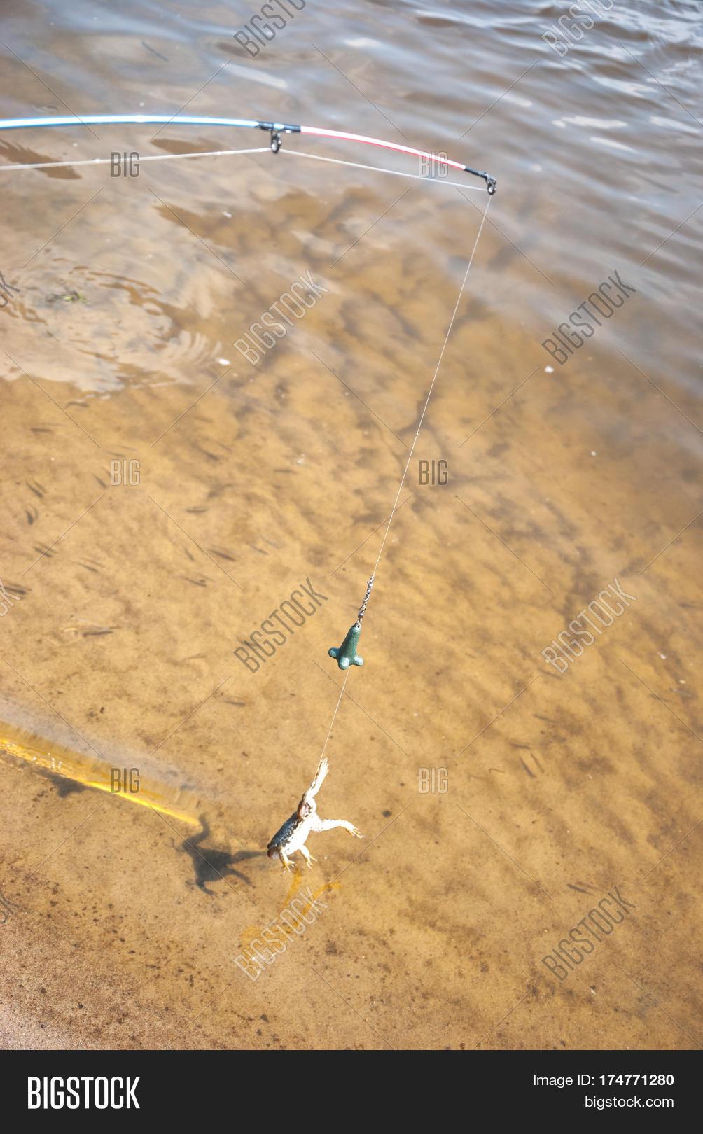 Fishing  Bait Cat-fish Image & Photo (Free Trial)   Bigstock