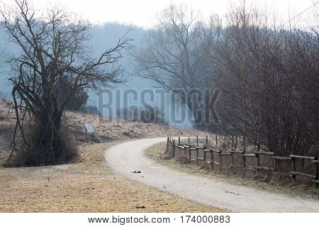 Gloomy path in the nature with bald trees