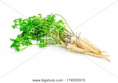 Fresh parsley with root leaf on white background.