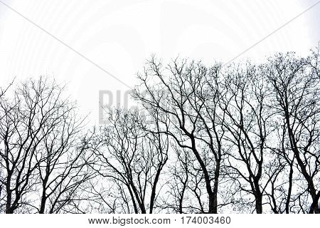 Branches of trees against the sky. Empty forest