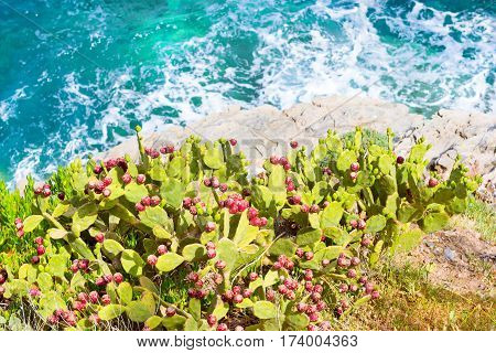 Flowering cactus growing on rocky cliff of shore over sea. Waves break on rocky shore. Tourist beach resort in village of Bali Crete island Greece Beach Caves
