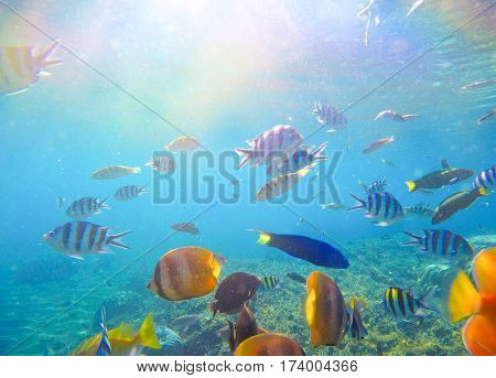 Underwater landscape with tropical fish and sunlight. Exotic island lagoon with oceanic life. Coral reef ecosystem. Colorful aquarium fishes. Dascillus butterflyfish parrotfish swimming in sea water