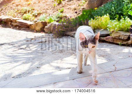 Resort Cat Begging Food