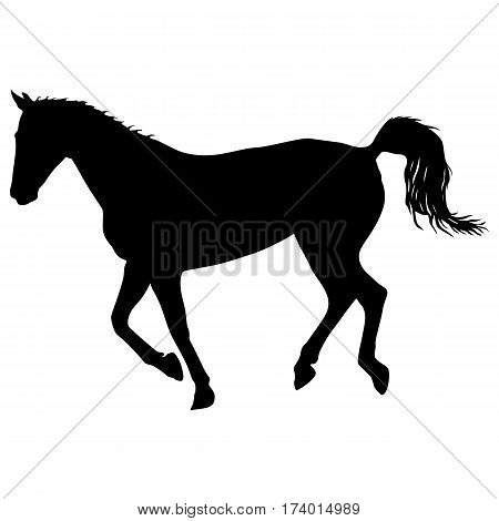 silhouette of black mustang horse vector illustration.