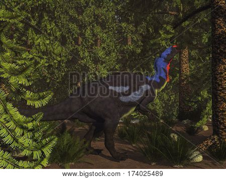 Camptosaurus dinosaur eating in wollemia pine forest - 3D render
