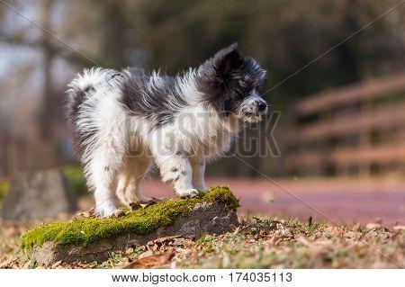 Outdoor Portrait Of An Elo Puppy