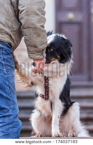 Elo Dog Giving Paw To His Master
