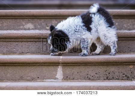 Elo Puppy Is Walking On Stairs