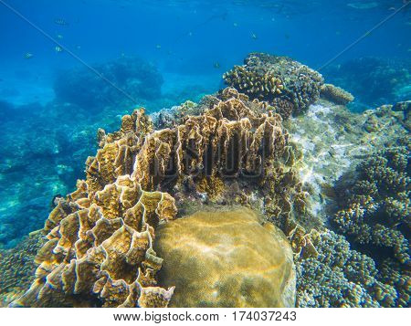 Underwater landscape with coral reef relief. Tropical sea lagoon with diverse corals. Yellow coral reef close photo. Undersea view in exotic island seashore. Snorkeling image from warm tropical sea