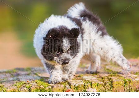 Cute Elo Puppy Walks On A Wall