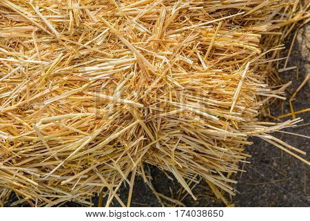 A Bunch Of Yellow Straw On The Black Background Of An Empty Slab Of Slate.