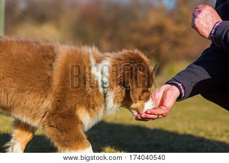 Man Gives His Puppy A Treat