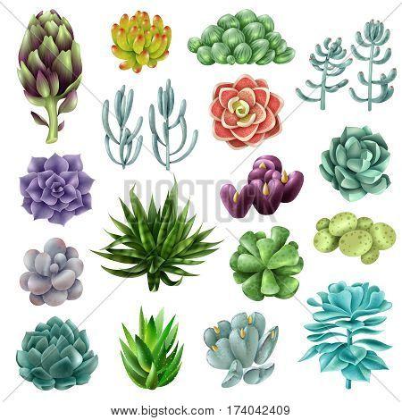 Set of gradient colored succulents and artichokes leaves and petals. Isolated colored succulents. Vector illustration