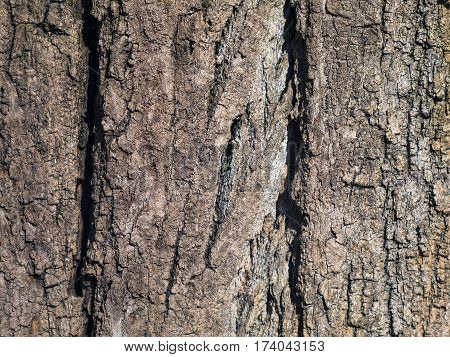 The texture of a huge tree bark