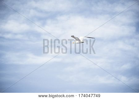 Seagull And Blue Sky Photographh