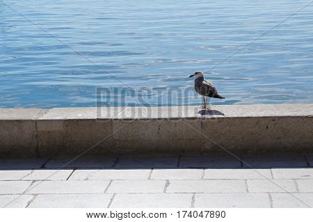 Lonely gull standing on the sea promenade