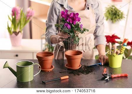 Female gardener planting spring flowers