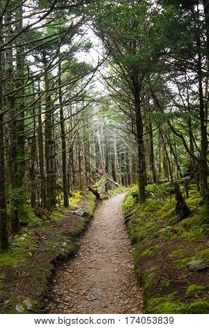Trail at the top of Mt. LeConte Great Smoky Mountains National Park