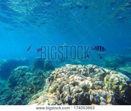 Coral reef with tropical fish underwater image. Fish silhouettes undersea photo. Clean blue sea lagoon with coral reef. Oceanic ecosystem. Underwater photography for wallpaper. Natural exotic aquarium
