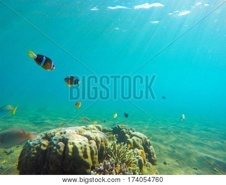 Underwater landscape with tropical fish. Clownfish undersea photo. Clean blue sea lagoon with coral reef. Oceanic ecosystem. Underwater photography for wallpaper. Turquoise seawater with sunlight
