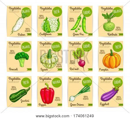 Organic vegetables cards. Fresh bell pepper and green onion, broccoli, eggplant and radish, zucchini, cauliflower, pumpkin, beet, pea, kohlrabi, squash veggies for price tag, food packaging design