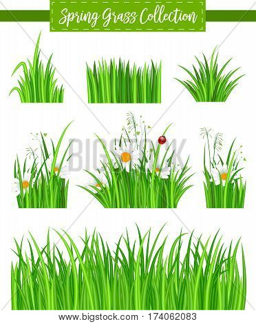 Green grass border set with green grass isolated and chamomile flower on white background vector illustration. Realistic green grass design with shadow, eco nature green grass frame. Green grass concept. Vector landscape with green grass.