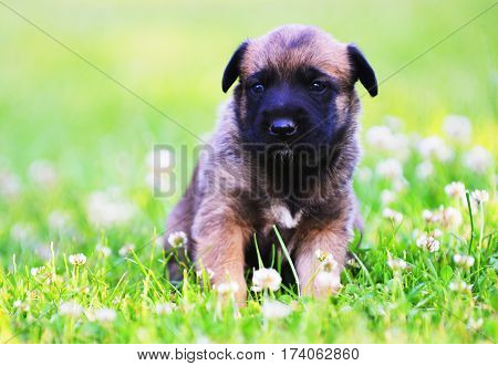 Puppies In Field