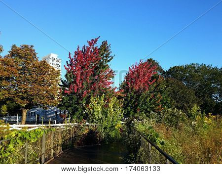 fall foliage in the early morning under a clear blue sky on a footpath through Lincon Park, Chicago, Illinois