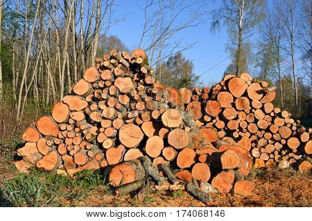 stack firewood logs on field near forest